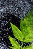 Zielony liść Pod lodem Zdjęcia Stock