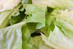 zielony liść sałaty macro obrazy stock