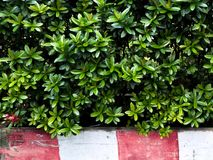 Zielony liść, liść tekstura Zdjęcia Stock