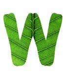 Zielony liść tekstury abecadło Zdjęcia Stock