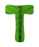 Zielony liść tekstury abecadło Fotografia Stock