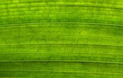 Zielony liść tekstury tła zakończenie up fotografia stock