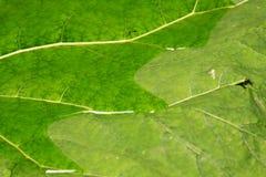 Zielony liść tekstury tło 02 Zdjęcia Royalty Free
