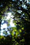 Zielony liść w świeży naturalnym Zdjęcia Royalty Free