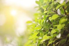 Zielony liść w deszczu Zdjęcia Royalty Free