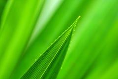 Zielony liść w tle Obrazy Stock