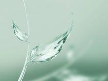 Zielony liść woda Zdjęcie Royalty Free