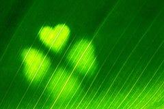 Zielony liść z koniczynowym kształtem Obraz Stock