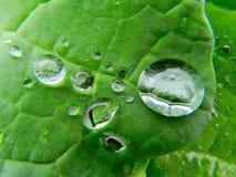 Zielony liść z podeszczowymi kropelkami na nim Fotografia Stock