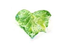 Zielony liść z waterdrops odizolowywającymi na białej tło ręce rysującej w akwareli Zdjęcie Royalty Free