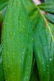 Zielony liść z wod kroplami dla tła Obrazy Stock