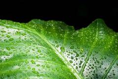 Zielony liść z wodnymi kropelkami, zbliżenie Fotografia Royalty Free