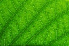 zielony liść zamknięta zielona tekstura zieleni liść natury wzoru tekstura Obrazy Stock