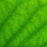 zielony liść zamknięta zielona tekstura zieleni liść natury wzoru tekstura Zdjęcie Royalty Free