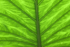 zielony liść zamknięty zielony wzór Zdjęcie Stock