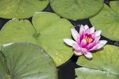 Zielony liścia i kwiatu tło Fotografia Stock