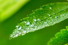 Zielony liścia i wody kropel szczegół Zdjęcie Royalty Free
