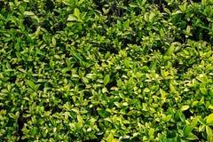 Zielony liścia odgórnego widoku tło Obrazy Royalty Free