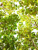 Zielony liścia tło Obraz Royalty Free