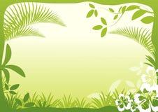 Zielony liścia tło Zdjęcia Royalty Free