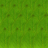 Zielony liścia tło Obraz Stock
