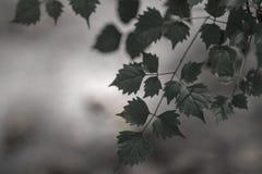 Zielony liścia tło dla kopii przestrzeni lub kopia teksta fotografia stock