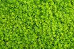 Zielony liścia tło, Zielony natury blackground Fotografia Royalty Free
