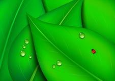 Zielony liścia tło z wodnymi kroplami Zdjęcia Stock