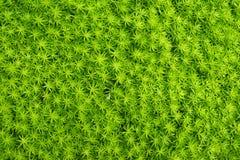 Zielony liścia tło, Zielony natury blackground Zdjęcie Stock