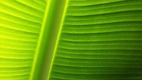 Zielony liścia zakończenie up Zdjęcie Stock