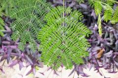 Zielony liścia zakończenie w naturze Obraz Royalty Free