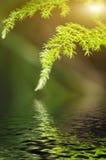 Zielony liść bokeh skutek, ranku światło słoneczne i wody odbicie, Zdjęcie Stock