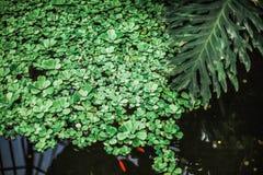 Zielony liści i kwiatów zwrotnik Zdjęcie Stock