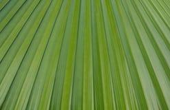 Zielony liścia wzór 01 Obraz Royalty Free