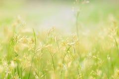 Zielony li?? na zamazanym greenery tle Pi?kna li?? tekstura w naturze fotografia royalty free