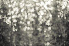 Zielony liścia bokeh jako tło tekstura Fotografia Royalty Free