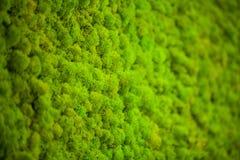 Zielony liszaj Mech ściana w moder piękna studiu fotografia royalty free