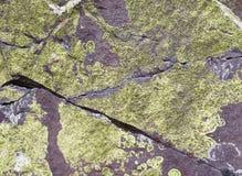 Zielony liszaj na skałach dla tła fotografia royalty free