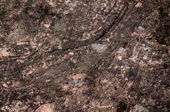 Zielony liszaj na szarości skale obrazy stock