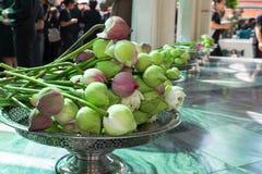 zielony lotos Zdjęcia Stock