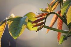 Zielony mały liść na kiju przy tłem popielatym Fotografia Royalty Free