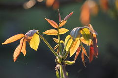 Zielony mały liść na kiju przy tłem popielatym Fotografia Stock