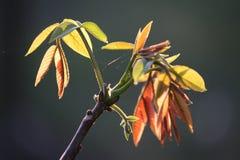 Zielony mały liść na kiju przy tłem popielatym Obrazy Royalty Free