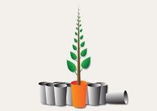 Zielony mały drzewo Fotografia Stock