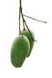 2 zielony mango Zdjęcie Stock