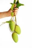 Zielony mango w ręce Obraz Stock