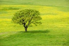 zielony meadow spring drzewo Zdjęcia Royalty Free