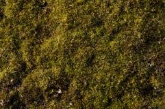 zielony mech obraz royalty free