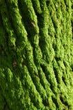 zielony mech obrazy stock