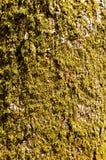 zielony mech Zdjęcia Royalty Free